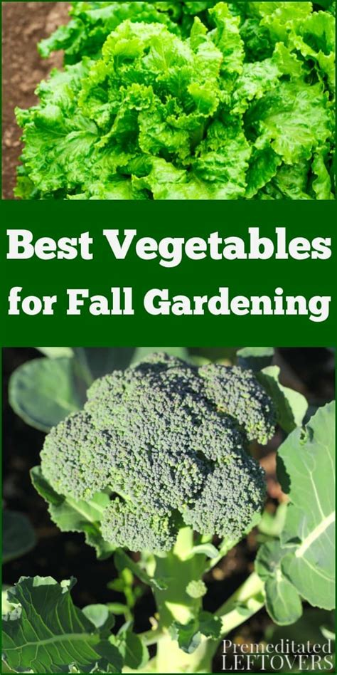 fall gardening best vegetables for fall gardening