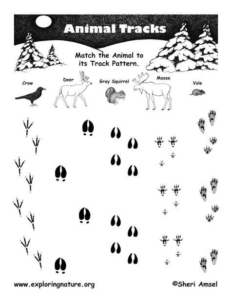 printable animal tracks identification match the animal to its tracks pattern general