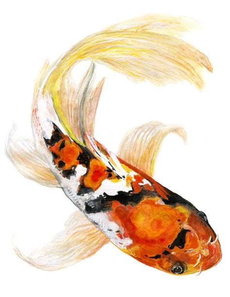 watercolor koi tattoo 75 best japanese coy fish references images on