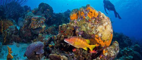 bonaire dive enjoy diving the of bonaire with sand dollar