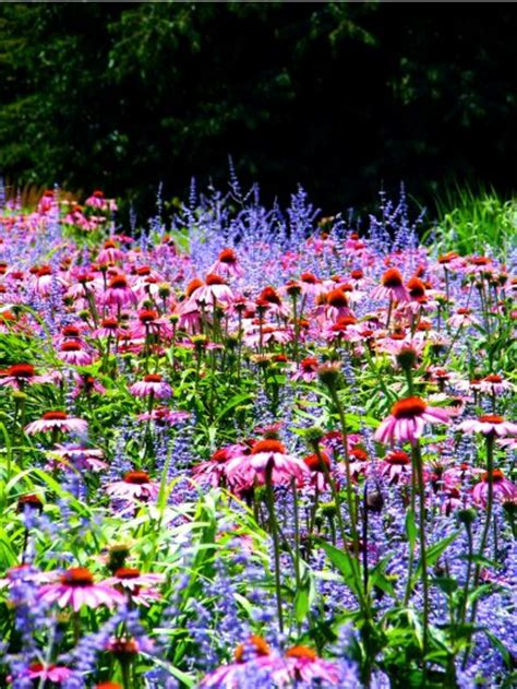 late blooming perennials how to add late summer blooming perennials to the garden