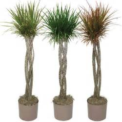 House plants amp plant best sellers