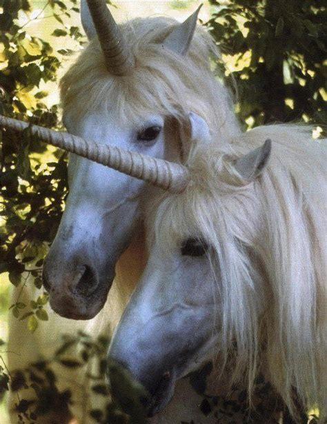 unicorns are real on tumblr