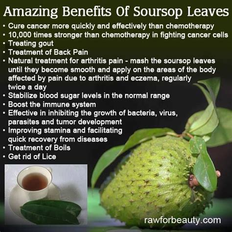 fighting cancer miracle cure for cancer the story of a writer who used to be a pharmaceutical chemical researcher has cured himself and helped his friends beat cancer for books 60 best images about soursop fruit on dr oz