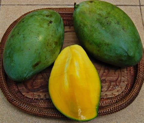 popular indonesian mangoes  musttry indoindianscom
