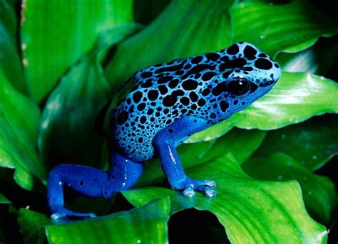 hi definition wallpapers box colored frog high definition wallpapers