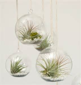 Air Plant Vases 301 moved permanently