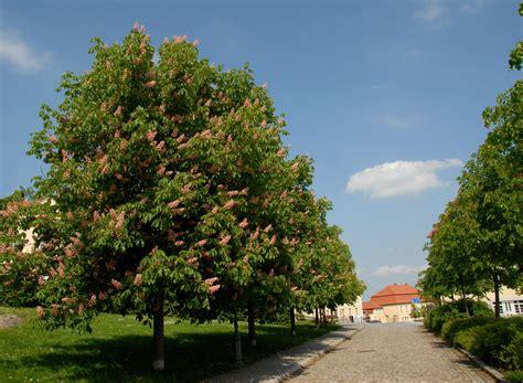 Garten Kaufen Auf Usedom by Pflanzen Kaufen B 228 Ume Pflanzen Sortiment Gartenwelt
