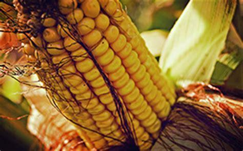 di commercio di bologna prezzi cereali cereali prezzi mercato borsa merci previsioni mercato