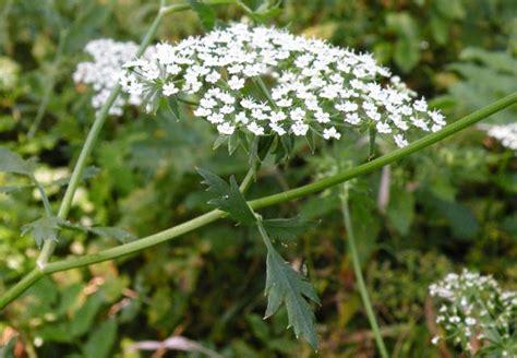 fiori di bach test gratuito test fiori di bach blackhairstylecuts