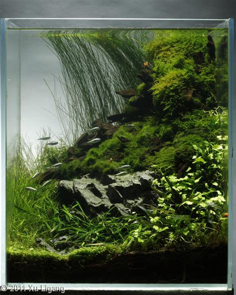aquascaping tall tanks aquascaping tall tanks 28 images elegant aquascaping pet pitch usa 24 best fresh