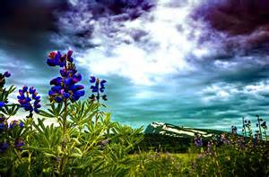 Blue flowers on sky background wallpaper forwallpaper com