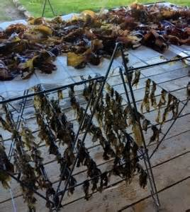 how to dry seaweed