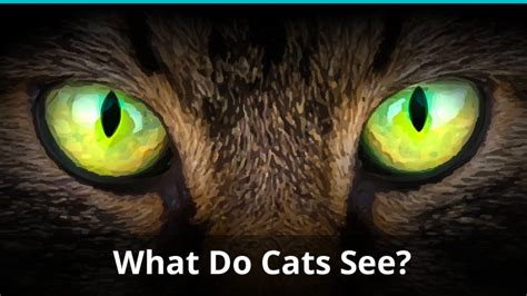 do cats see colors what do cats see color black and white something else