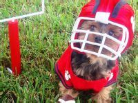 yorkie ewok costume 25 best images about costume s on dogs costumes and yorkie