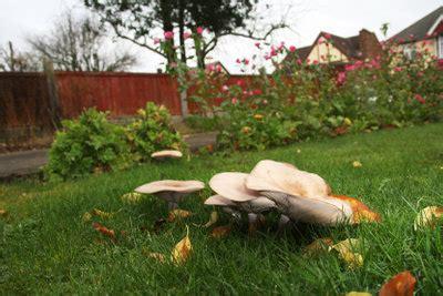 Mittel Gegen Pilze Im Rasen by Pilze Im Rasen Pilze Im Rasen Bek Mpfen Die 5 Besten