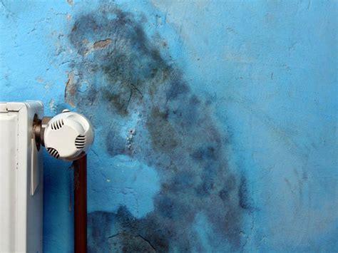 ursachen schimmel wohnung schimmel ursachen erkennen sch 228 den beseitigen