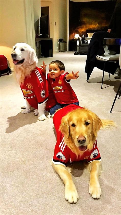 alexis sanchez dogs banner manchester united fans love what alexis sanchez has done