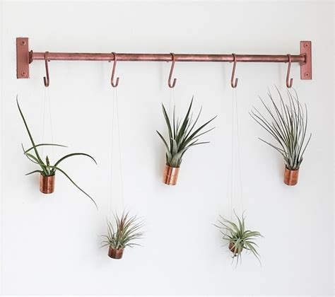 hanging air plant diy hanging air plants craftbnb