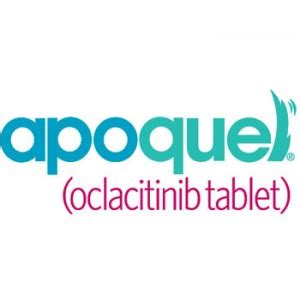 apoquel side effects in dogs apoquel should i use it in my allergic pruritic dogs vetgirl veterinary ce