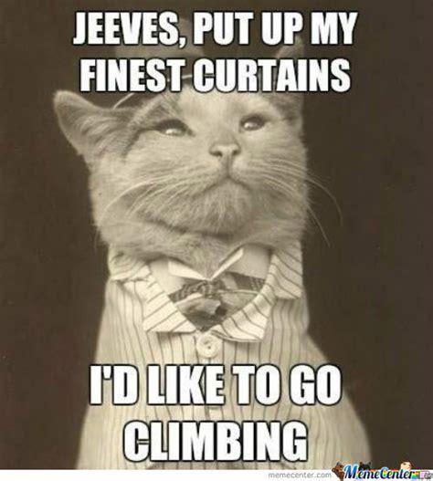 Classy Meme - classy cat by deadlybeaniv meme center