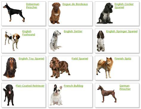 list  dog breeds  pictures dog training home dog