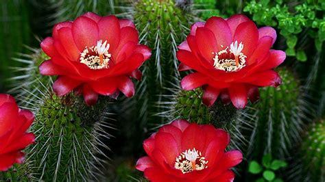 im 225 genes de flores y plantas rosas unique wallpaper im 225 genes de flores y rosas para escribir