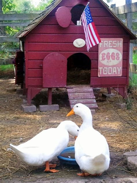 ducks for backyards duck house ideas hgtv