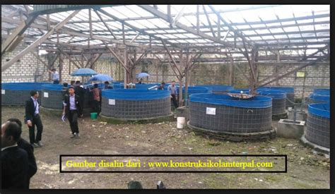 Jual Kolam Terpal Ngawi tutorial lengkap budidaya ikan lele sistem biofloc pertama
