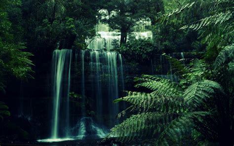 wallpaper  day small waterfall   jungle nice