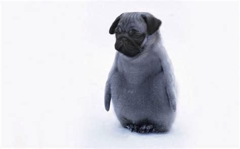 pug hybrids 21 who created nightmarish hybrid animals in photoshop smosh