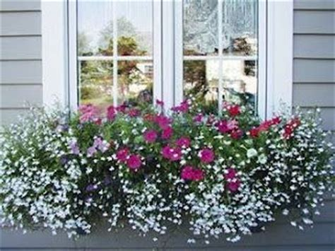 Flowers For Window Boxes Partial Shade - best 20 window boxes ideas on pinterest outdoor flower boxes flower boxes and window box flowers