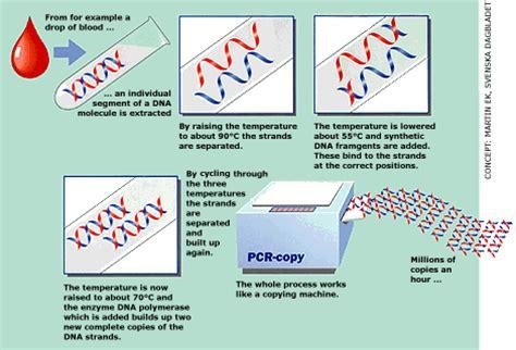 pcr test เทคโนโลย ช วภาพก บการดำรงช ว ต ประโยชน ของ pcr ในการตรวจ