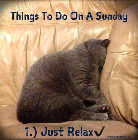 A Cat On A Sunday by 267 Best Images About Days Of The Week On Its