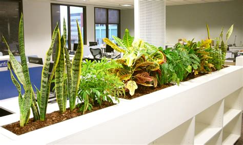 plants for the office hire office for green and clean work environment live spot