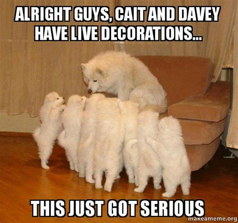 Serious Dog Meme - alright guys cait and davey have live decorations this