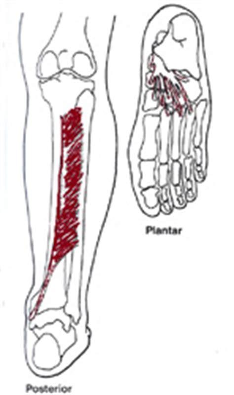 schmerzen mittelfuß innen schmerzen am unterschenkel innen