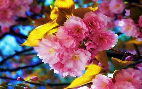 beautiful spring flowers free beautiful spring flowers computer desktop wallpaper