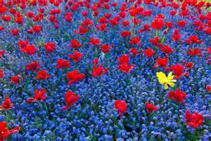 Home Flower home flower gardens and flower landscape pictures