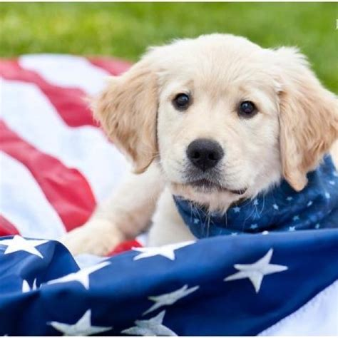 patriotic puppy names patriotic pets a collection of animals and pets ideas to try happy memorial day