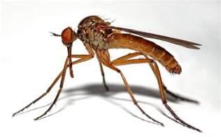 call bingham s professional pest management to eliminate