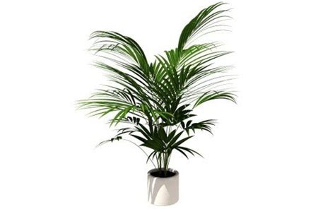 non toxic house plants for dogs keeping your pets safe 10 non toxic house plants aspca