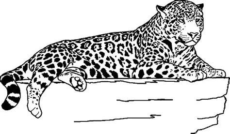 rainforest jaguar coloring pages 83 coloring pages jaguar for kids download jaguar