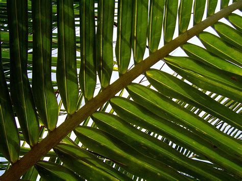 leaf pattern photography free stock photo 1756 rainforest patterns freeimageslive