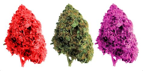 what do different colours mean purple red green weed a guide to your bud colors