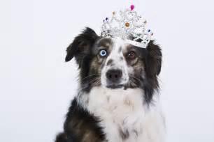 Dog Free Photo Dog Crown Funny Purebred Dog Free Image