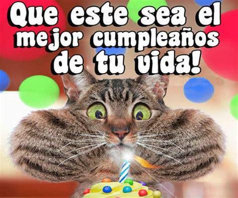 imagenes cumpleaños gatitos lindas imagenes de gatitos para cumplea 241 os