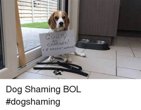 Dog Shaming Meme - 25 best memes about dog shaming dog shaming memes