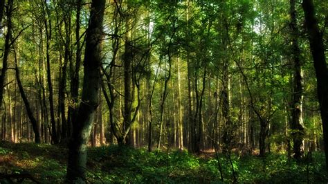 wallpaper of green forest green forest wallpaper 6022