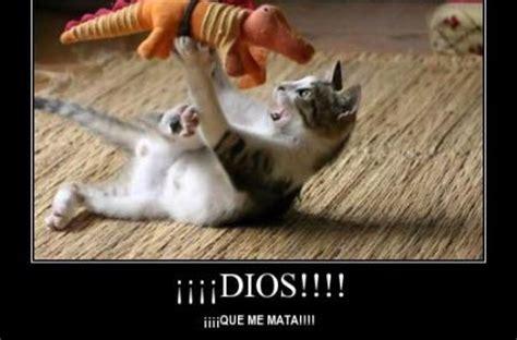 imagenes de animales graciosos para compartir en facebook desmotivaciones para facebook con animales divertidos